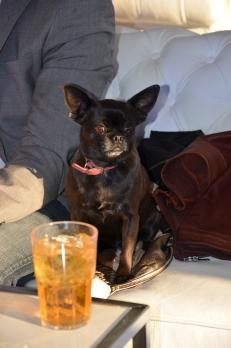 VIP hund med drink