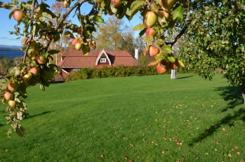 Tällberg äpplen