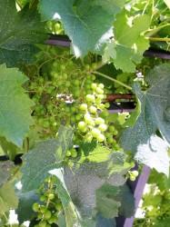 Winery Aleksandrovic